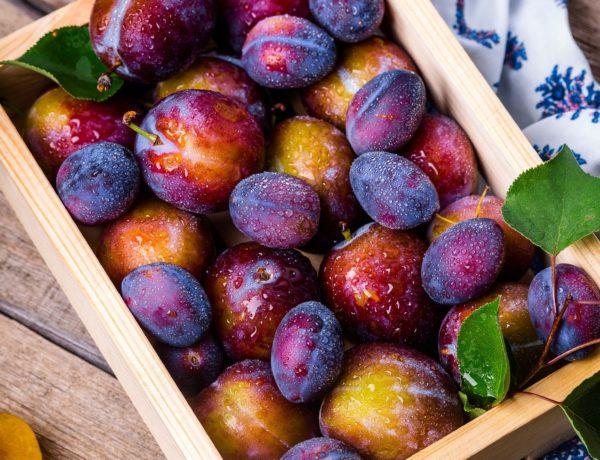 plum-1898196_1920-600x460 Un Panier XL Fruits gorgé de soleil