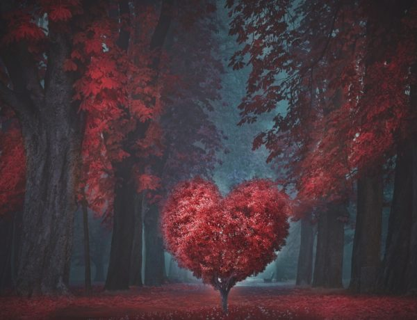 valentine-4805916_1920-600x460 Saint-Valentin - Notre sélection pour lui & elle