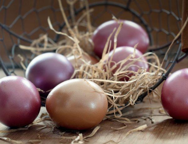 easter-eggs-1231120_1280-600x460 ATELIER C lance pour Pâques Les Créatures Imaginaires
