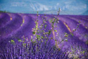moustiers-sainte-marie-3764937_1280-300x200 Les expériences à vivre en Haute Provence - La Bonne Etape
