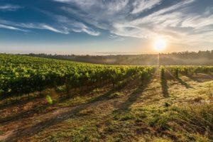 vineyard-428041_1280-300x200 Les expériences à vivre en Haute Provence - La Bonne Etape