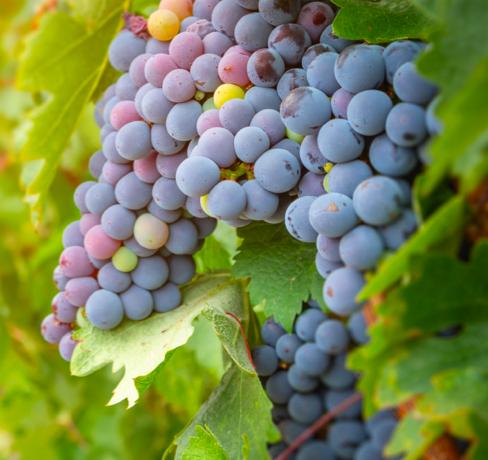 Capture-decran-2021-07-06-a-13.28.46-488x460 Trésors des vignes en format cosmétiques
