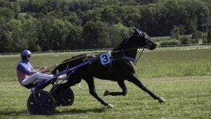 horse-4785285_640-300x169 QUINTÉ+ NIGHT SESSION HIPPODROME PARIS-VINCENNES